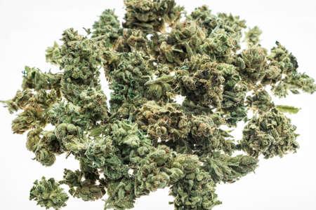 medical marijuana cannabis buds closeup on white studio background in amsterdam