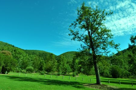 tree leaning in meadow with hills in background Stock Photo - 4794214