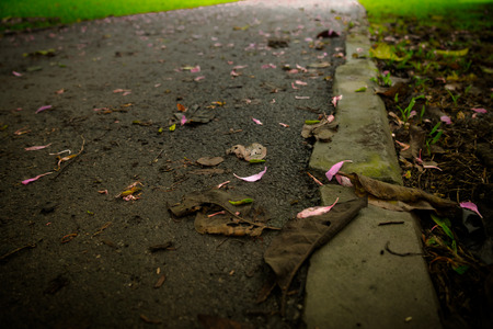 The streets are full of grass and flowers. Imagens