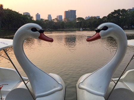 Couple Swan Boats Style Floating Together like Heart Shape used as Template Background Texture photo