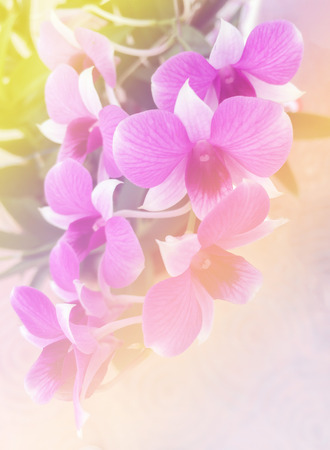 unsaturated: Orchids with Leaves Vintage Style used as Template