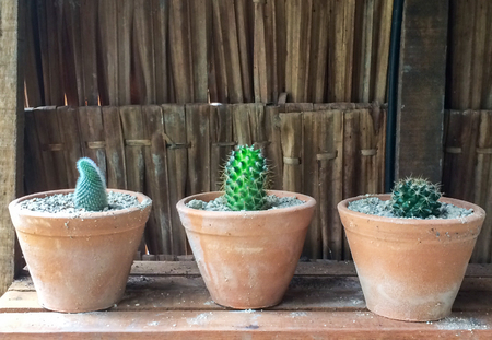 Group of Small Cactus in Orange Clay Flowerpots for INdoors Gardening used as Interior