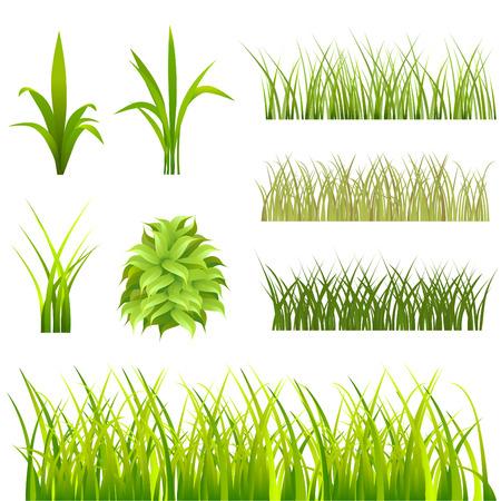 wild grass: conjunto de hierba