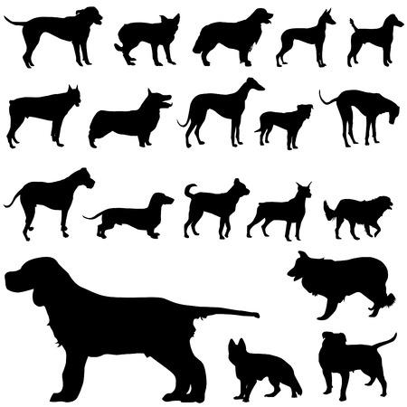doberman: Satz von Hund  Illustration