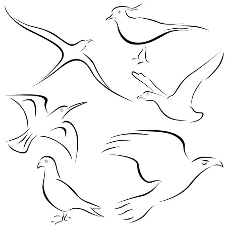 gull: bird designs  Illustration