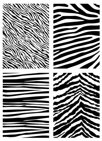 skin structure: zebra pattern  Illustration