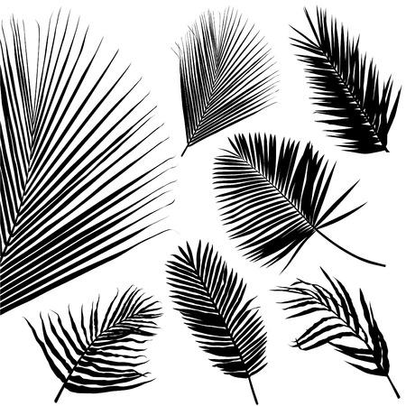 palm: palm leaf seamless pattern Illustration