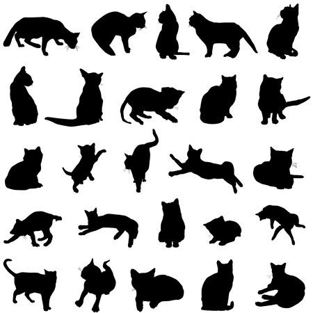 cat vector Stock Vector - 8497800