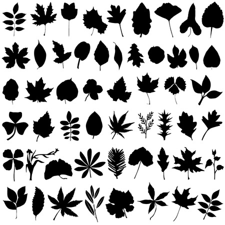 ferns: floral and leaf vector