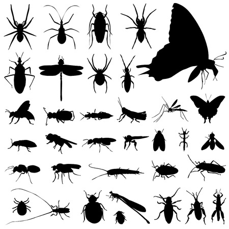 crickets: set of insect vector  Illustration