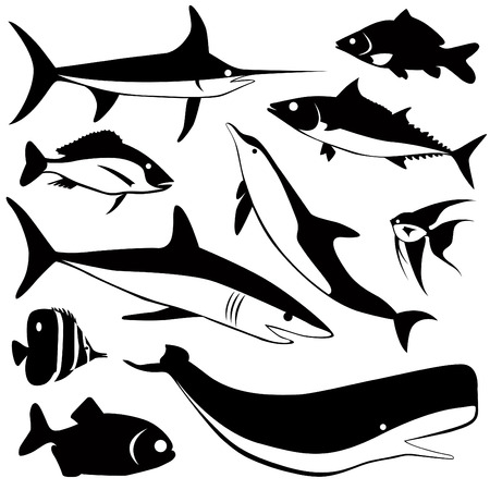 pez espada: conjunto de pescado