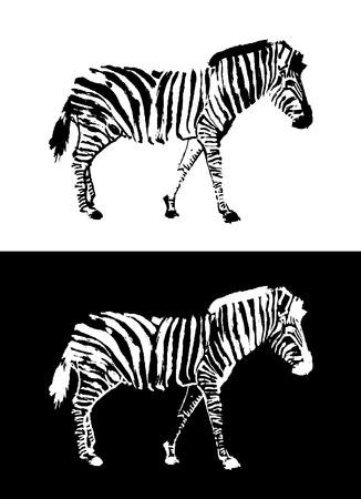 zebra design vector  Vector