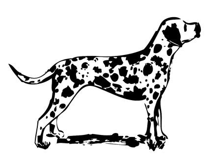 dalmatian: dalmatian design vector