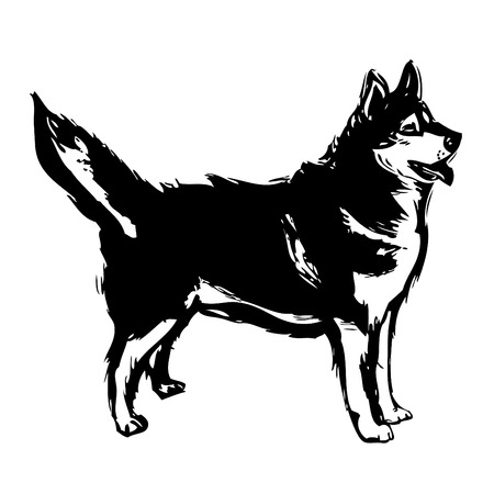 husky: siberian husky illustration