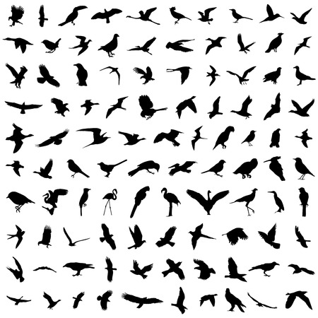 flock of birds: big set of birds vector
