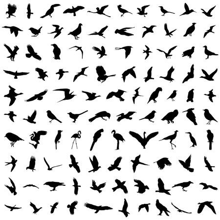 birds in flight: big set of birds vector