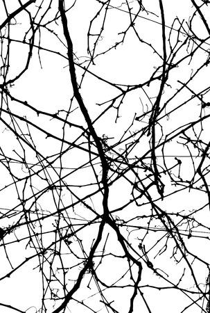 fern: background  line  vector