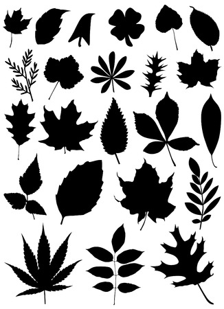 set of leaf  Vector