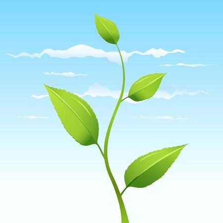 plant vector Stock Vector - 9148392