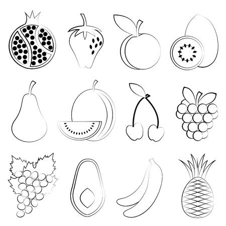 black berry: fruit drawing  Illustration