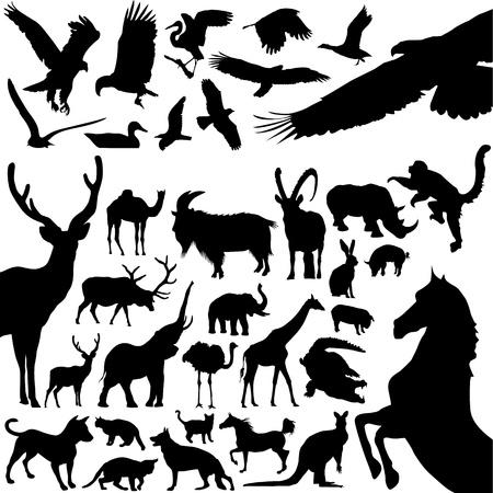 duck silhouette: animals