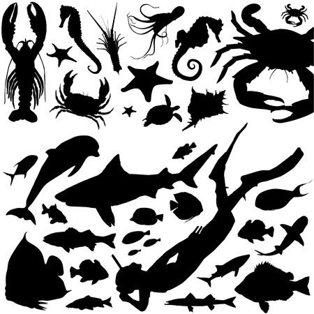 sea animals and scuba diving vector Stock Vector - 9316284