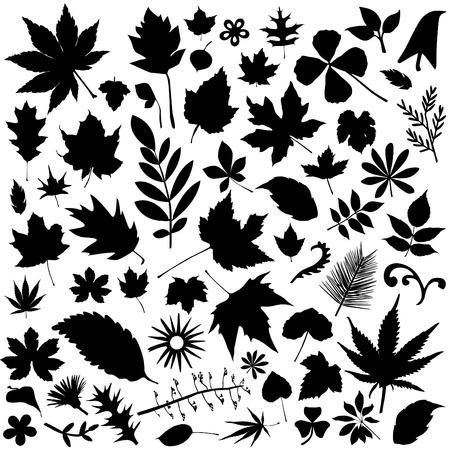 プラタナス: 葉のベクトルのセット
