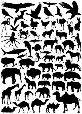 vulture: Collection of animal vector
