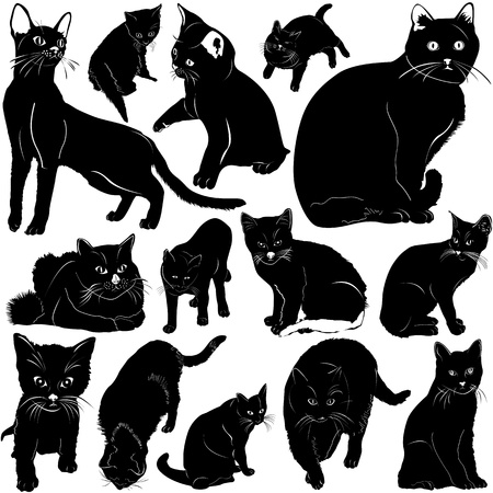 cat with details Stock Vector - 9447469