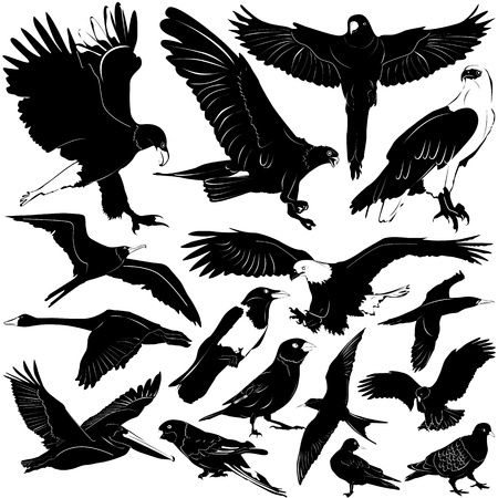 birds (details)  Vector