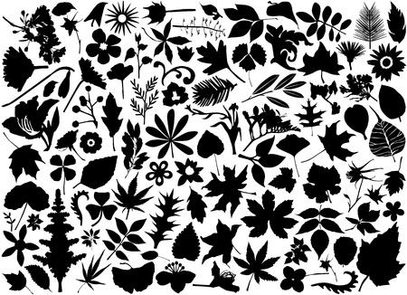 ostrożeń: zestaw kwiatów i liÅ›ci  Ilustracja
