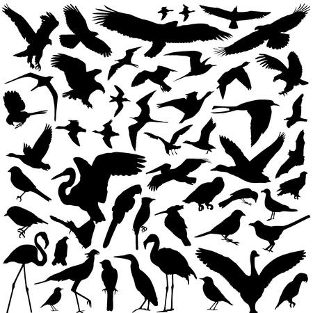 bird vector Vector