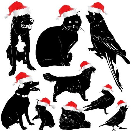 christmas pet animal (dog, cat, bird)  Vector