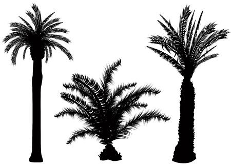 palm tree vector  Vector
