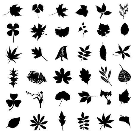 ferns: collection of leaf and flower vector Illustration