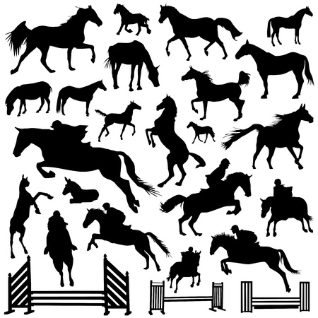 collection of horse vector Vector
