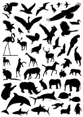 antelope: collection of animal vector  Illustration
