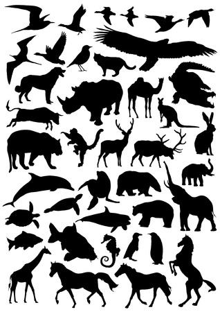 cock duck: big set of wild animals vector Illustration