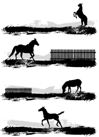 dressage: cheval  Illustration