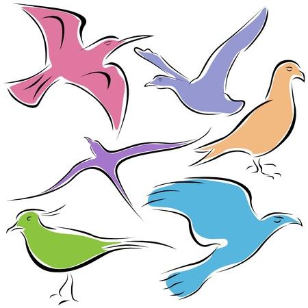 pollination: decorative bird