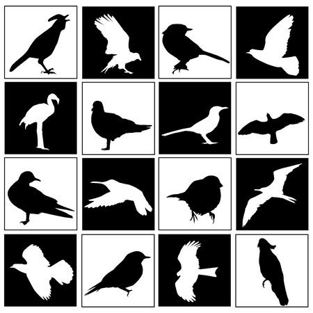 mouettes: ensemble des oiseaux Illustration