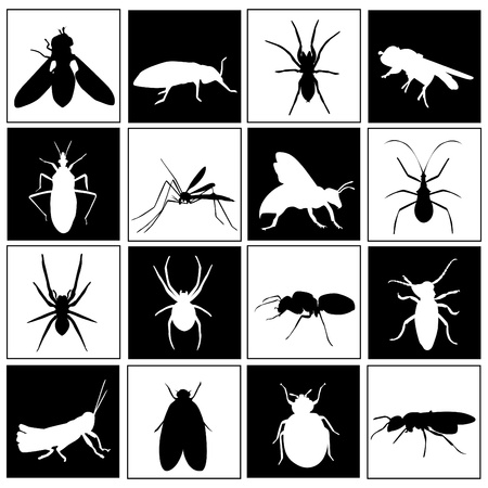 an insect: set of insect Illustration