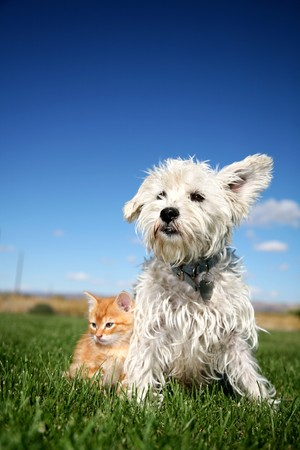 Cat and Dog Stock Photo - 4387244