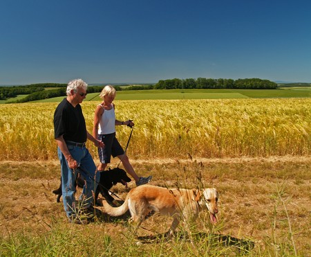 An elderly married couple taking their dogs for a walk