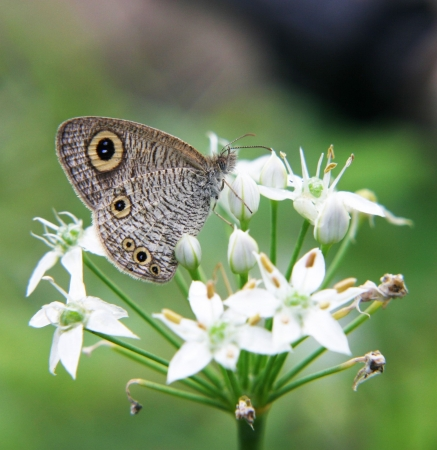 Butterfly on flowers Stock Photo - 642577