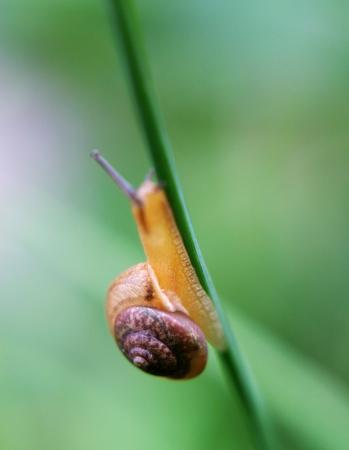 Snail going up stalk