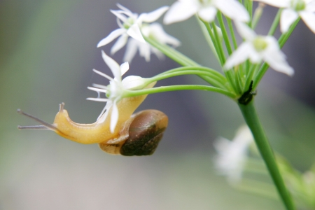 Snail Hanging on to flower