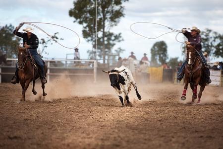 Dos vaqueros amarran un ternero en un rodeo campestre