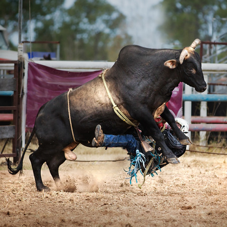 Rider falls off bucking bull at a country rodeo