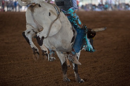Colorful gear of a young cowboy riding a calf at an event at an indoor country rodeo in Australia